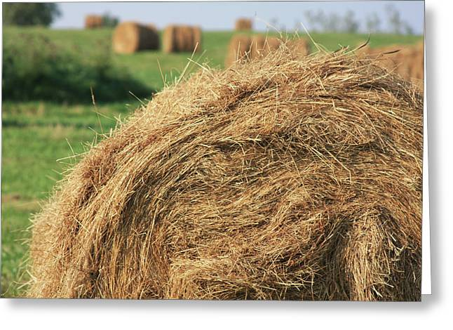 Greeting Card featuring the photograph Hay Bail Closeup by Tatiana Travelways