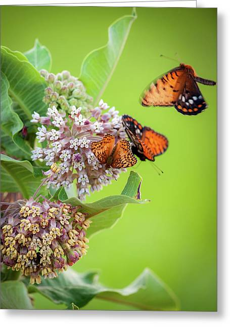 Head Over Heals For Milkweed Greeting Card