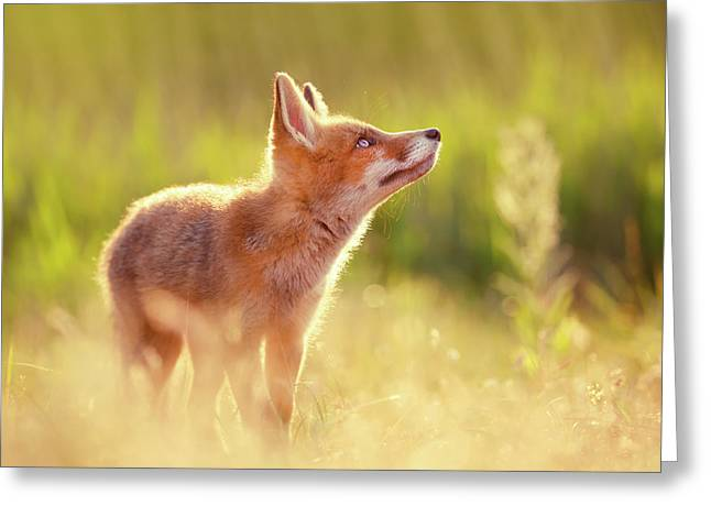 Head Up High - Young And Eager Fox Kit Greeting Card