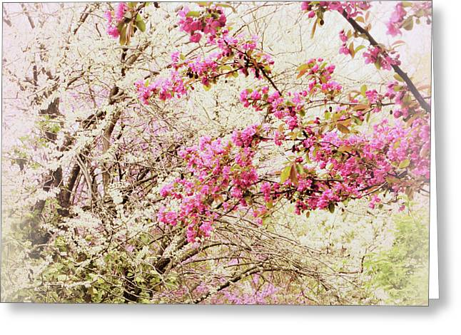The Fleeting Nature Of Blossoms Greeting Card