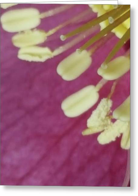Helleborus Reproductive Structures 46 Greeting Card