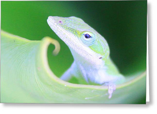 Hello, Anole. 2 Greeting Card
