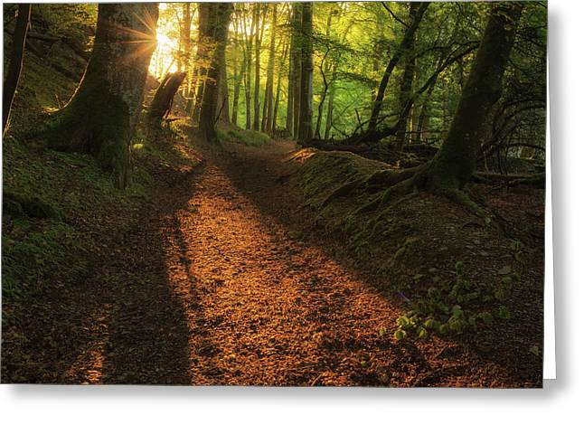 Greeting Card featuring the photograph Henllan Woods Sunrise by Elliott Coleman