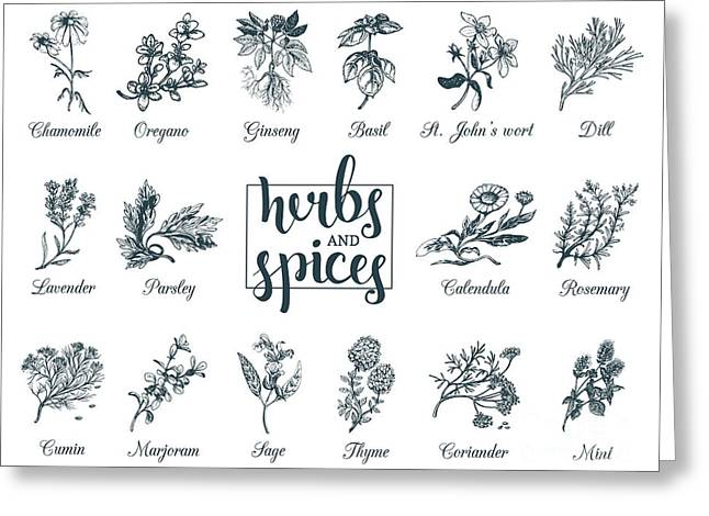 Herbs And Spices Set. Hand Drawn Greeting Card