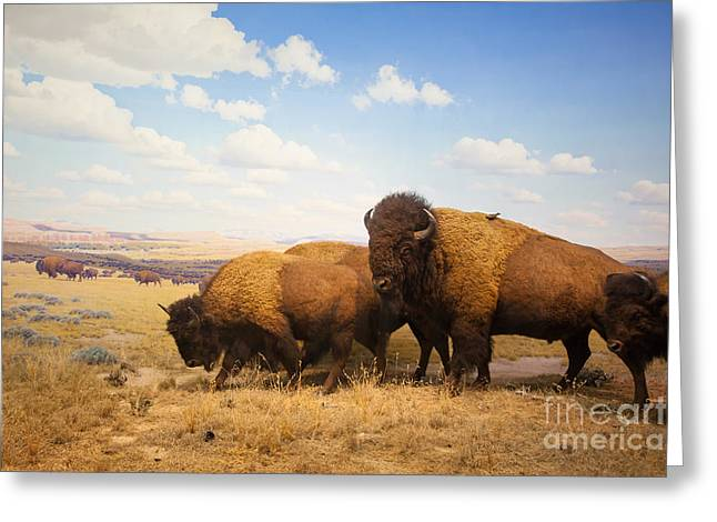 Herd Of Bison Greeting Card