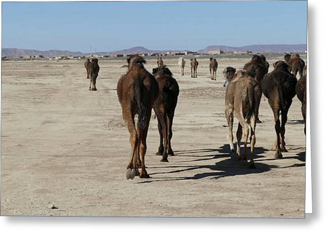 Herd Of Camels Crossing The Highway Near  Rissani Greeting Card