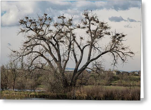 Greeting Card featuring the photograph Heronry by Jon Burch Photography