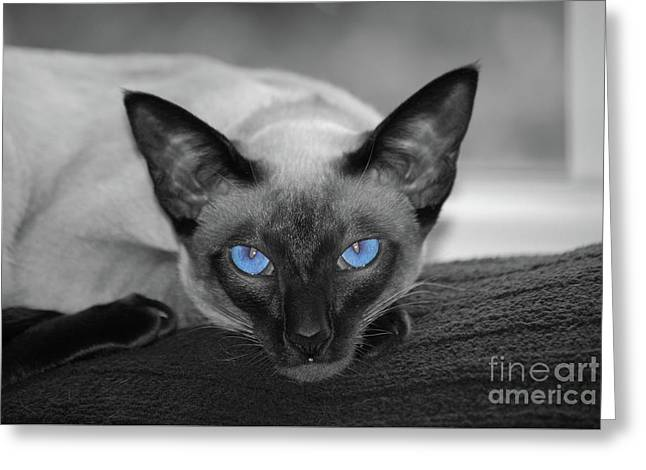 Hey There Blue Eyes - Siamese Cat Greeting Card