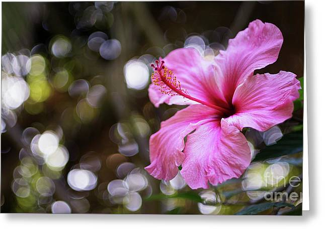 Greeting Card featuring the photograph Hibiscus Flower Bloom by Pablo Avanzini