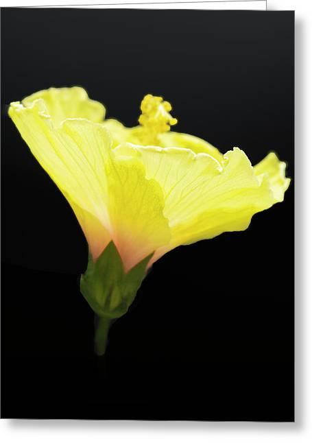 Hibiscus In Black Greeting Card