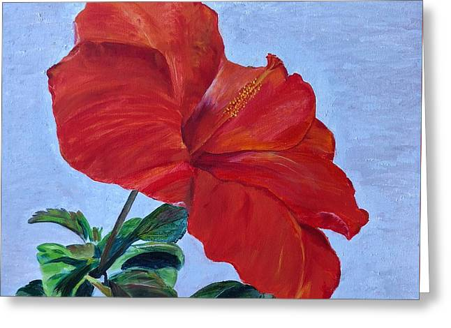 Greeting Card featuring the painting Hibiscus by Mkc