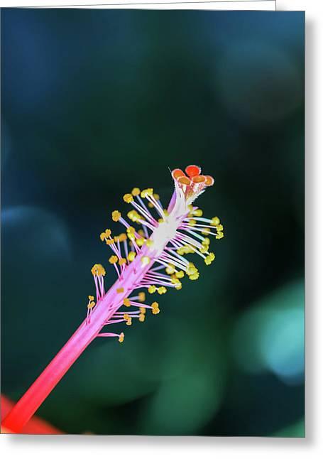 Hibiscus' Pistil Greeting Card
