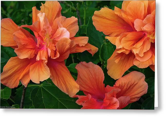 Hibiscus Tripcus Orangus Greeting Card