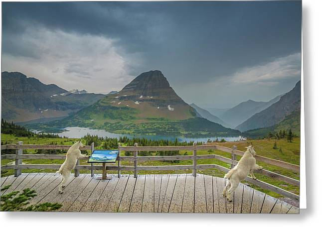 Hidden Lake Overlook // Glacier National Park Greeting Card