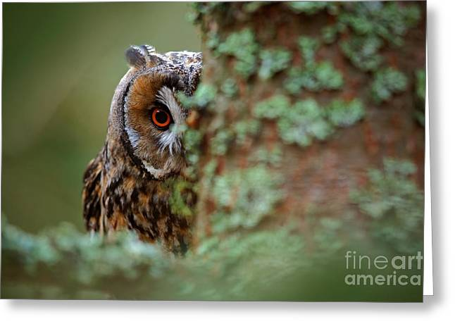 Hidden Portrait Of Long-eared Owl With Greeting Card