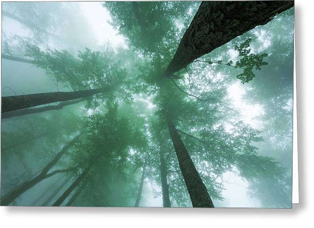 High In The Mist Greeting Card