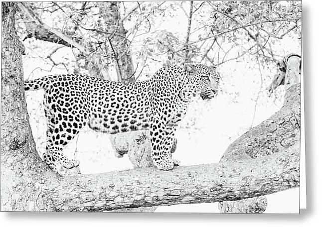 High Key Leopard Greeting Card