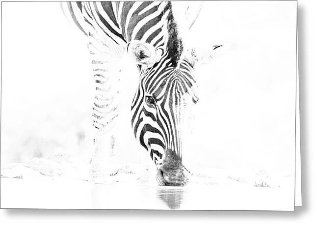 High Key Zebra Drinking Greeting Card