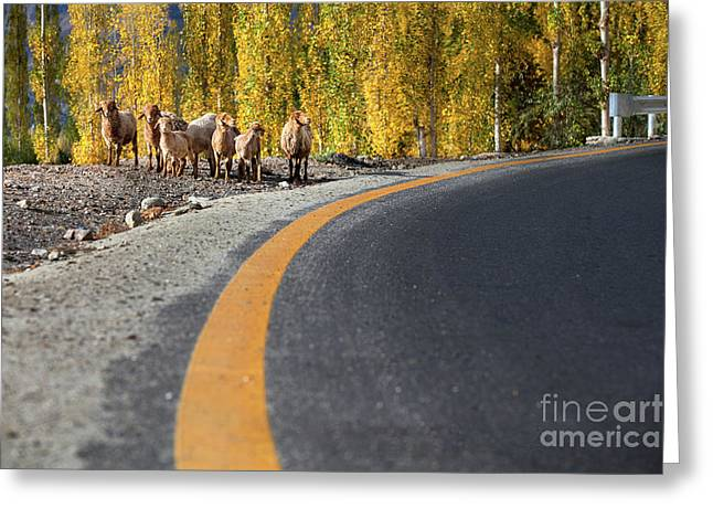 Highway Story Greeting Card