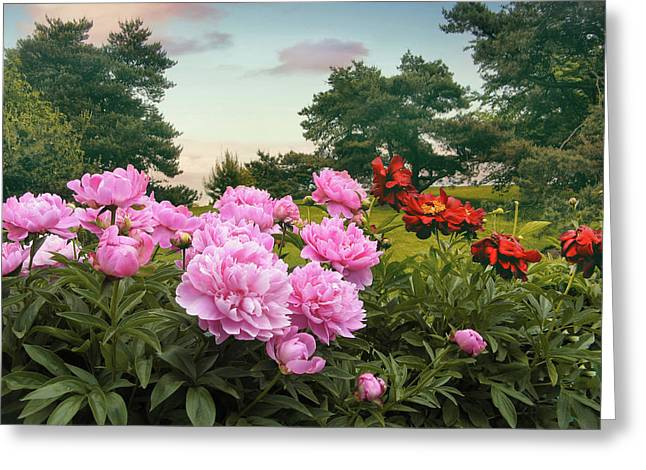 Hillside Peonies Greeting Card