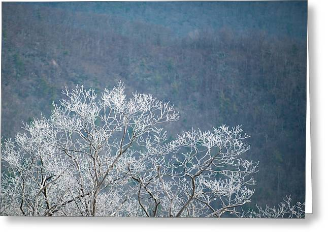 Hoarfrost Collects On Branches Greeting Card