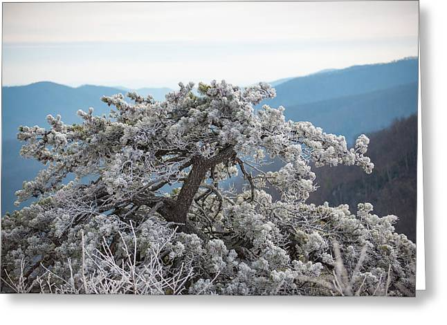 Hoarfrost In The Blue Ridge Mountains Greeting Card