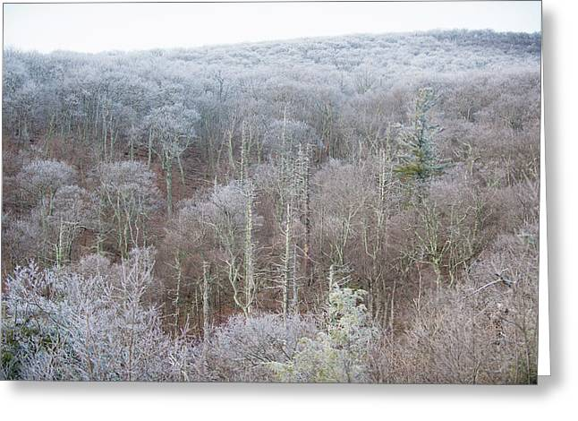 Hoarfrost In The Tree Tops Greeting Card