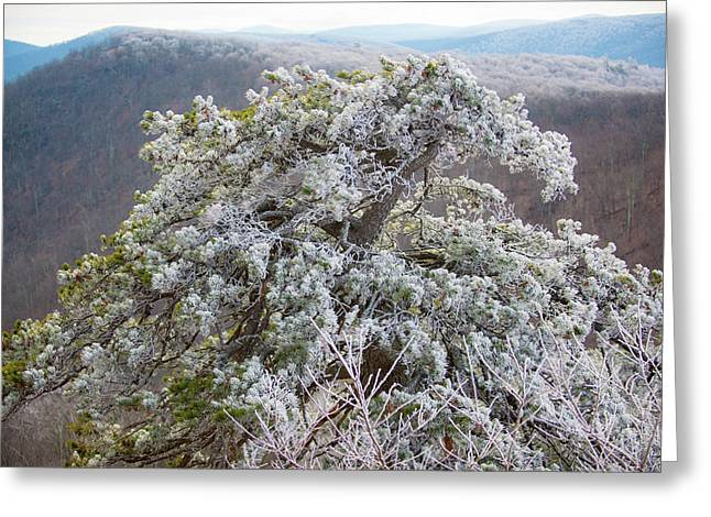 Hoarfrost On Trees Greeting Card
