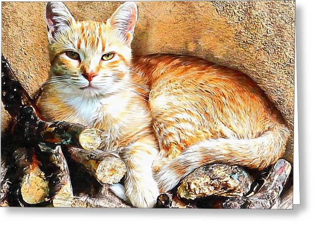 Greeting Card featuring the photograph Hogarty The Ginger Cat by Dorothy Berry-Lound
