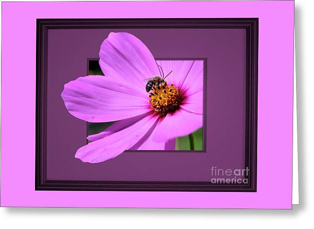Honey Bee On Pink Greeting Card
