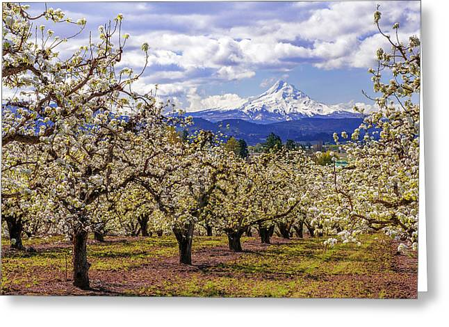 Hood River Orchard Greeting Card