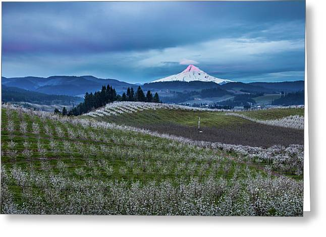 Hood River Orchard Sunrise Greeting Card