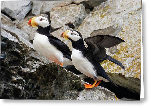 Horned Puffin Pair Greeting Card