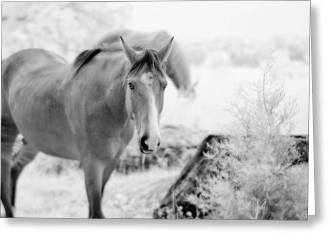 Horse In Infrared Greeting Card