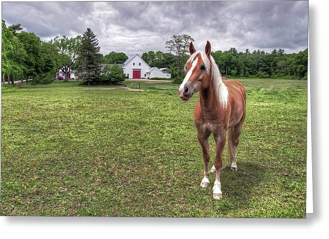 Horse In Pasture Greeting Card