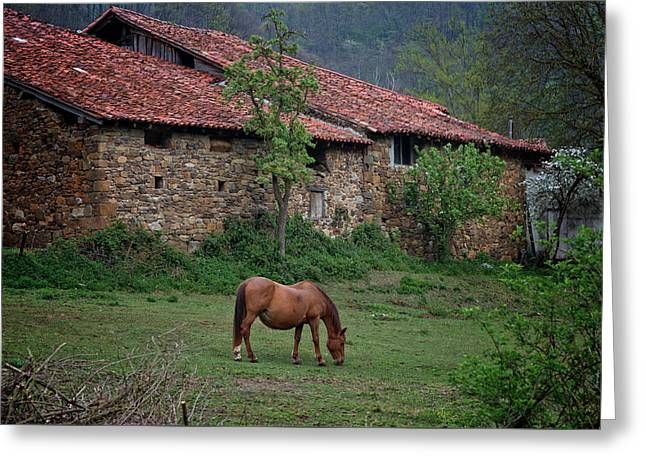 Horse In The Field Next To A Rural House Greeting Card