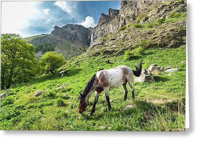 Greeting Card featuring the photograph Horse On Balkan Mountain by Milan Ljubisavljevic