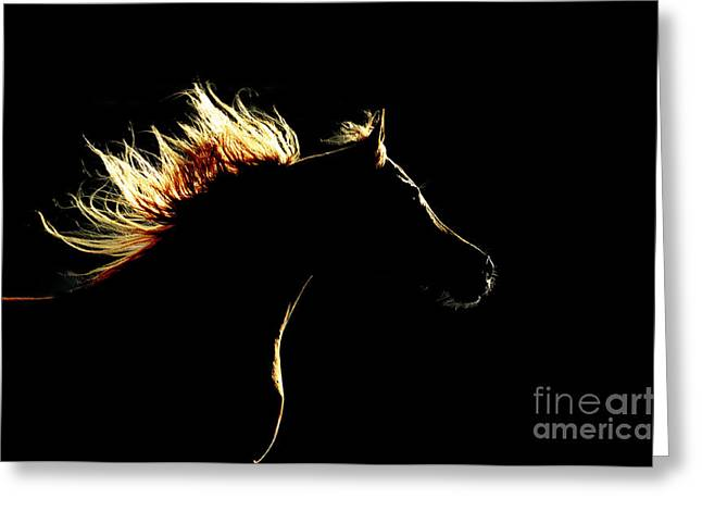 Horse Silhouette On The Dark Background Greeting Card