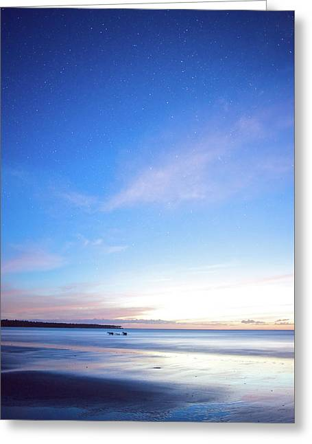 Horses Play In The Surf At Twilight Greeting Card