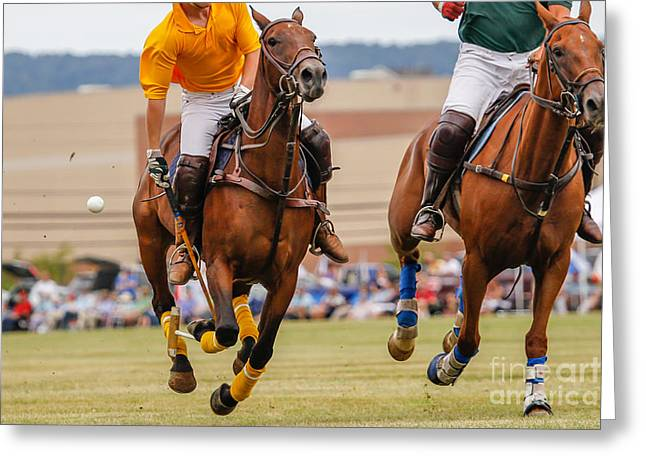 Horses Running In A Polo Match Greeting Card
