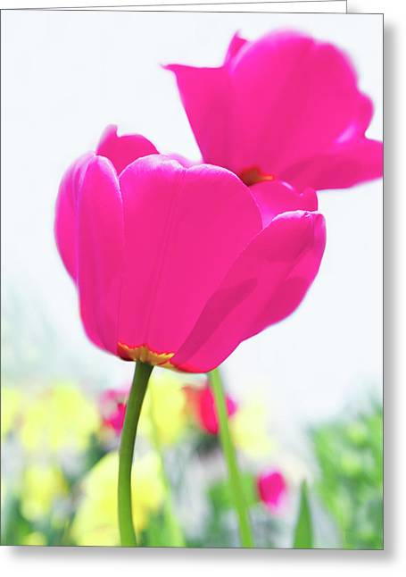 Hot Pink Prelude Greeting Card