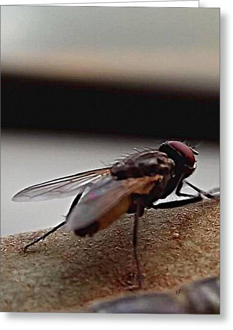 Greeting Card featuring the digital art Housefly Detail by Shelli Fitzpatrick