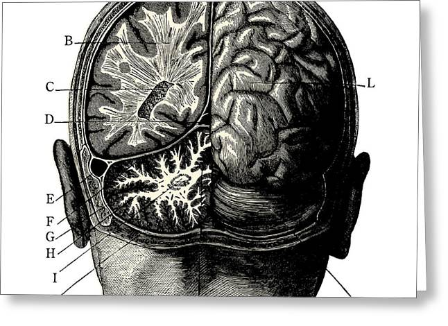 Humain Brain -vintage Engraved Greeting Card