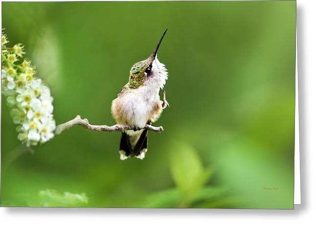 Hummingbird Flexibility Greeting Card