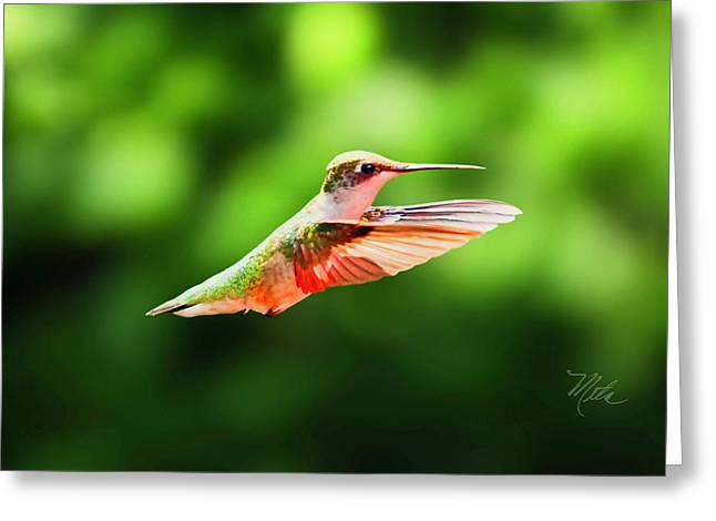 Hummingbird Flying Greeting Card