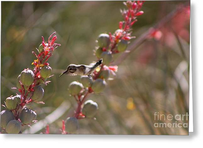 Hummingbird Flying To Red Yucca 1 In 3 Greeting Card