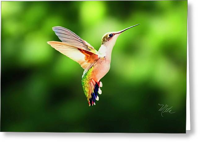 Hummingbird Hovering Greeting Card