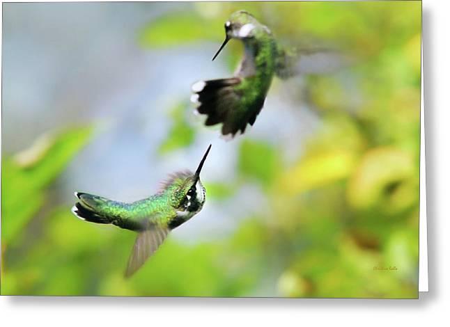 Hummingbirds Ensuing Battle Greeting Card