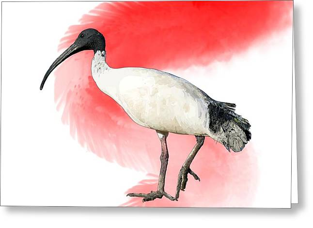 I Is For Ibis Greeting Card