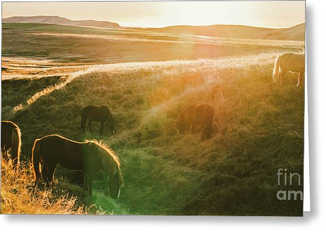 Icelandic Landscapes, Sunset In A Meadow With Horses Grazing  Ba Greeting Card